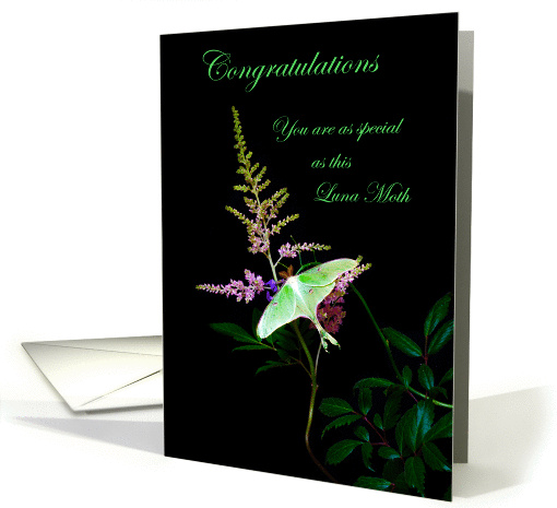 Congratulations, You're Special as a Luna Moth, card (990421)