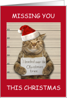 Missing You this Christmas, Incarcerated Cat in Santa Hat. card