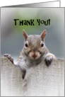Squirrel Says Thank You Card