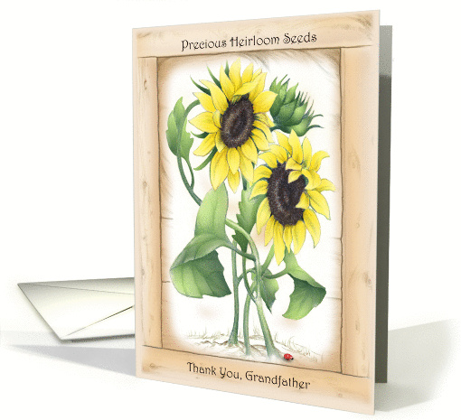 Precious Heirloom Sunflower Thank You to Grandfather card (1167942)