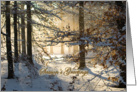 Light filtering through snowy woods - Christmas Season's greetings card