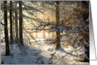 Light filtering through - winter woods blank note card