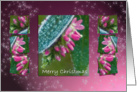 Hebe Pink Ice Crystals - Winter Flowers Merry Christmas Holidays card