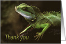 Little Green Spiny Lizzard on rock Thank You Green Natural blank card