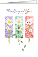 Thinking of You, Blank, - 3 Long Stem Daisies on Color Panels card