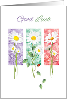 Good Luck - 3 Long Stem Daisies on Color Panels card