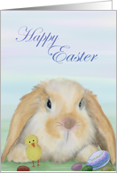Happy Easter with bunny, chick and eggs card