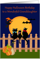 Birthday on Halloween to Granddaughter with Three Cute Black Cats card