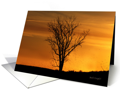 Country Sunset, Blank Note Card, Any Occasion card (1420140)