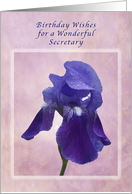Birthday Wishes for a Secretary, Purple Iris on Pink card
