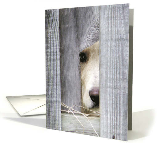 Peeping Puppy Missing You card (1491642)