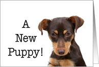 Congratulations, new puppy adoption card