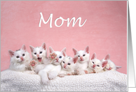 Many kittens happy Mother's Day Mom card
