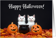 Two fluffy white kittens Happy Halloween card