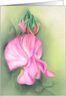 Pink Sweet Peas Floral Pastel Artwork Any Occasion Blank card