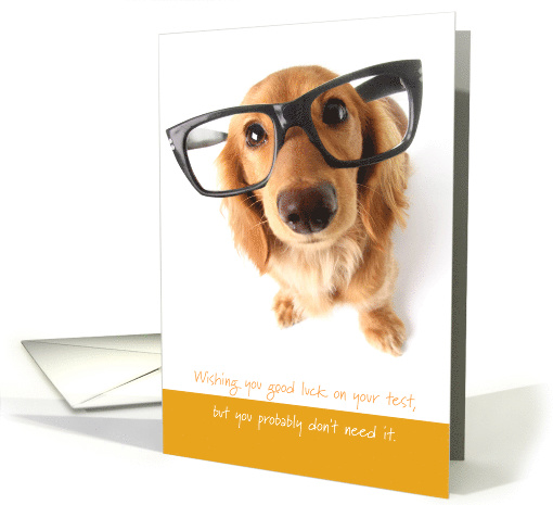 Good Luck with Test You Worked Doggone Hard card (1514724)