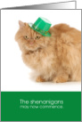 Funny Cat St. Patrick's Day - The shenanigans may now commence card