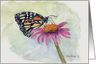 Butterfly on a Pink Daisy. card