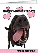 Happy Mother's Day From The Dog card