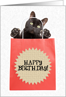 Happy Birthday Cat in a Bag Humor card