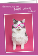 Happy Birthday Grandma You are PAW-sitively the Best Cat Humor card