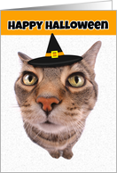Happy Halloween Cute Cat in Witch Hat Humor card