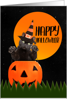 Happy Halloween For Anyone Cute Black Cat in Pumpkin card