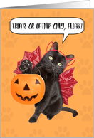 Happy Halloween For Anyone Cat Trick-or-Treating Humor card