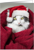 Get Well Soon and Merry Christmas Funny Cat Humor card