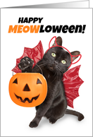 Happy Halloween For Anyone Funny Cat in Costume Humor card