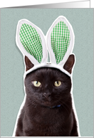 Happy Easter For Anyone Funny Cat in Bunny Ears Humor card