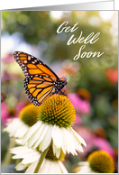 Get Well Soon For Anyone Beautiful Butterfly Photograph card