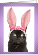 Happy Easter For Anyone Funny Bunny Cat in Rabbit Ears Humor card