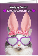 Happy Easter Granddaughter Cat in Bunny Ears Humor card