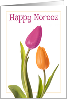 Happy Norooz for Anyone Beautiful Tulips card
