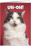 Uh-Oh Happy Belated Birthday Funny Kitty Humor card