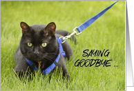 You Will Be Missed Cat on Leash Humor card