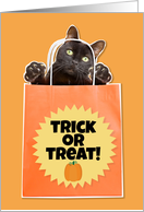 Happy Halloween For Anyone Black Cat in Bag Humor card