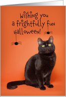 Happy Halloween For Anyone Black Cat with Spiders Humor card