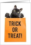 Happy Halloween For Anyone Black Cat in Treat Bag Humor card
