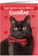 Happy Valentine's Day Grandson Cute Cat in Bow Tie Humor card