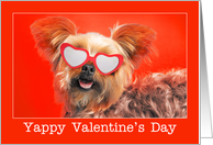 Happy Valentine's Day For Anyone Yorkie Dog in Sunglasses Humor card