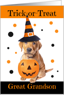 Happy Halloween Great Grandson Cute Puppy in Costume Humor card