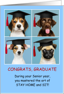 Dogs Graduation Congratulations COVID-19 Humor card