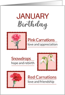 January Birthday Pink and White Carnations and Snowdrops Meaning card
