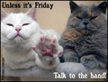 wednesday, everyday, funny, hump day, talk to the hand, cats